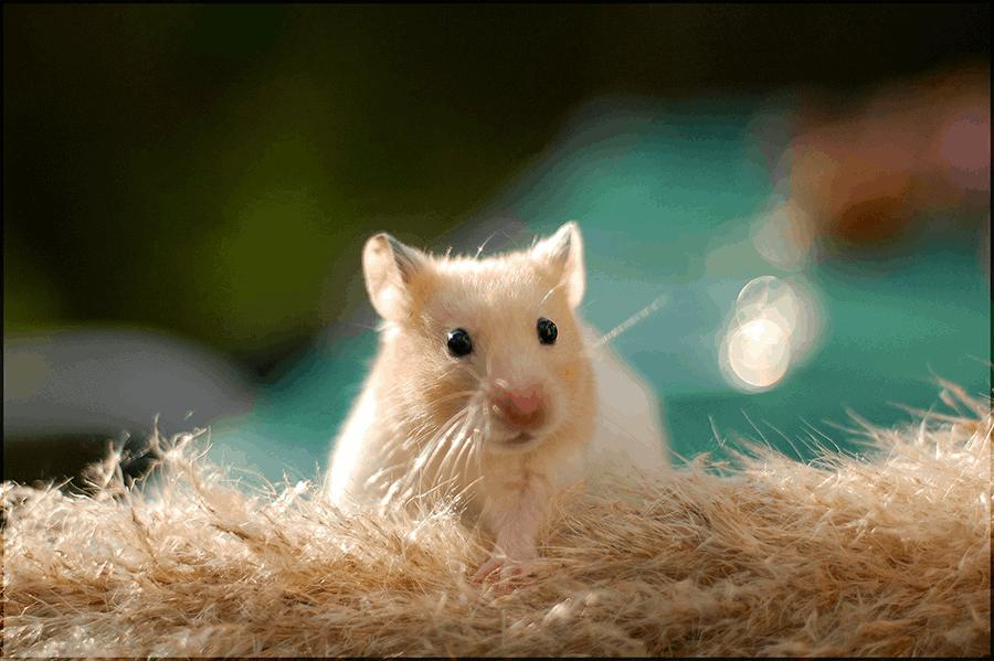 Bí ẩn giấc mơ thấy chuột và con số phát tài?