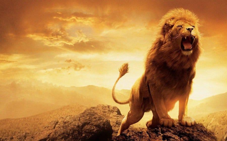 Giải mã giấc mơ thấy sư tử nên đánh con đề số nào?